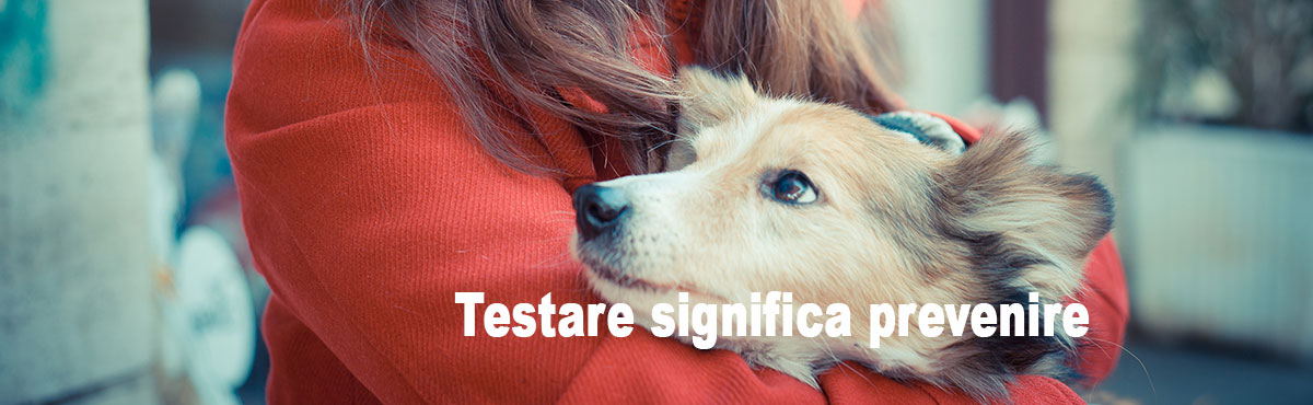 Ehrlichia - Ehrlichiosi canina